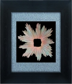 Classical Glass Shadow Box Frames Art