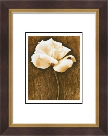 20x24inch Modern Art Paintings of Nature Flower picture frames